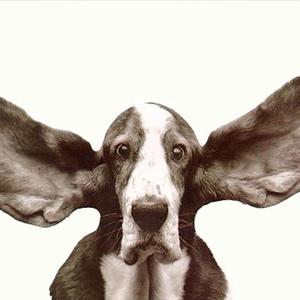Dog ears